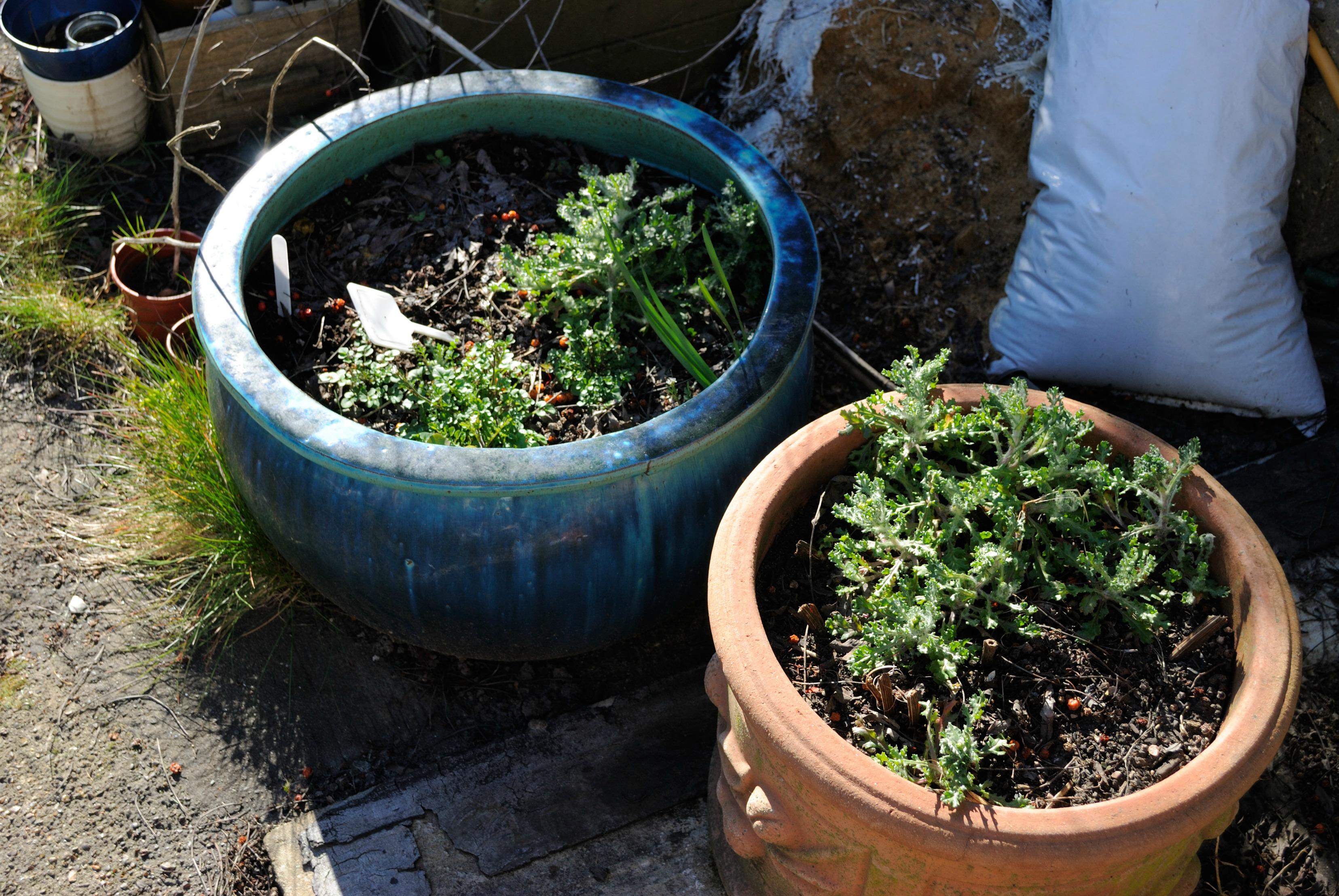 Garden Mar 11