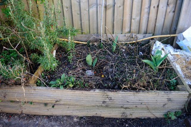 Garden Mar 13