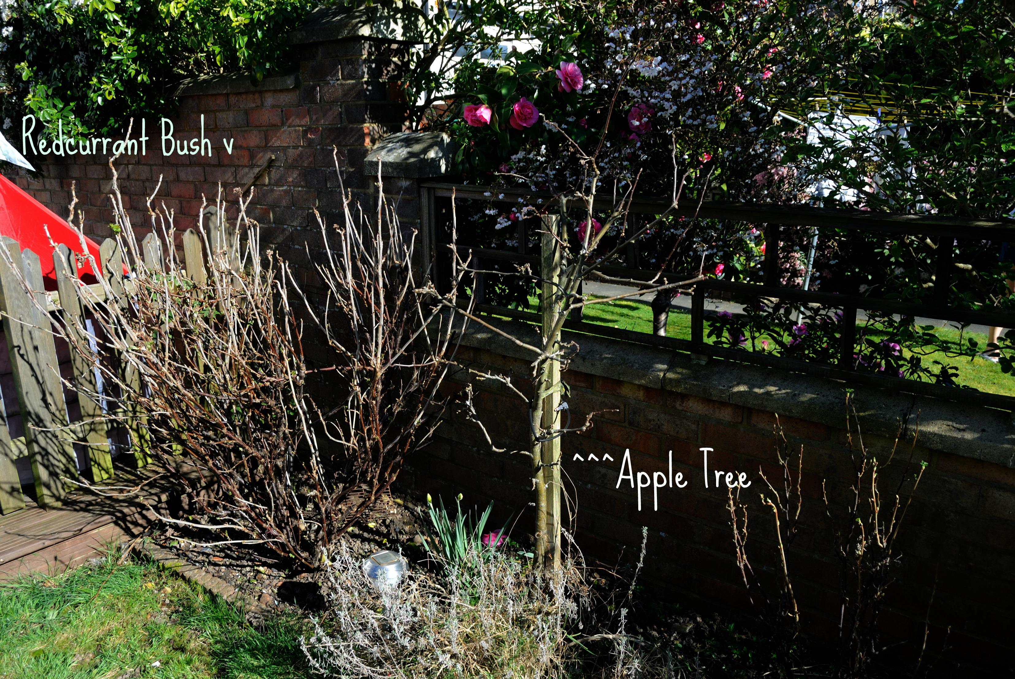 Garden Mar 4