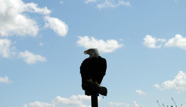 Eagle Heights 15