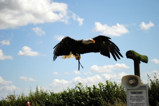 Eagle Heights 17