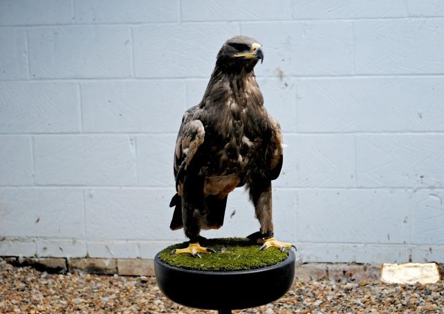 Eagle Heights 3
